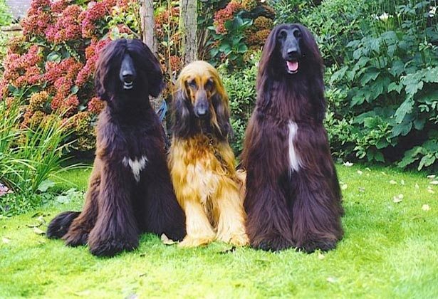 Tonka,Sasha and Nanas the show team.